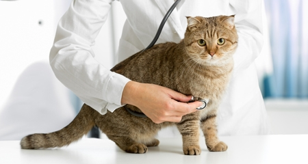 Signs that You Should Take Your Pet to a Veterinarian – Immediately